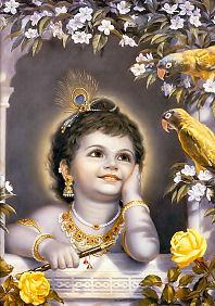 Krishnas Parrots